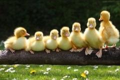 patke-tov-bijele-slika-73335763-min